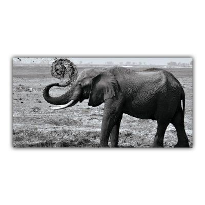 Éléphant d'Afrique Noir et Blanc