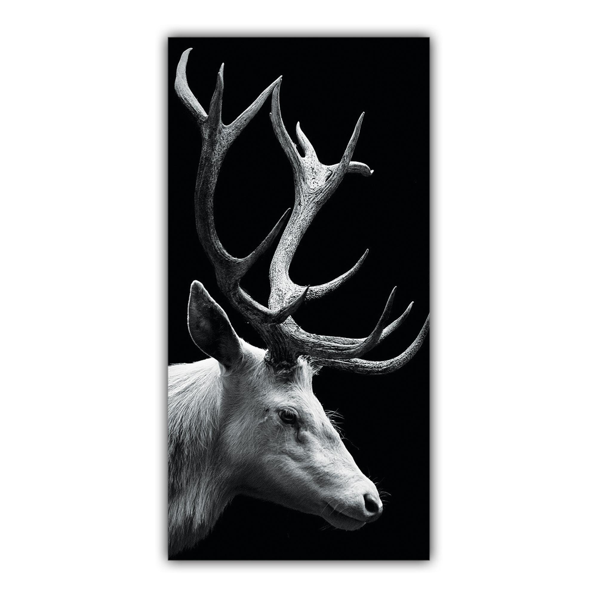Cerf Noir et blanc