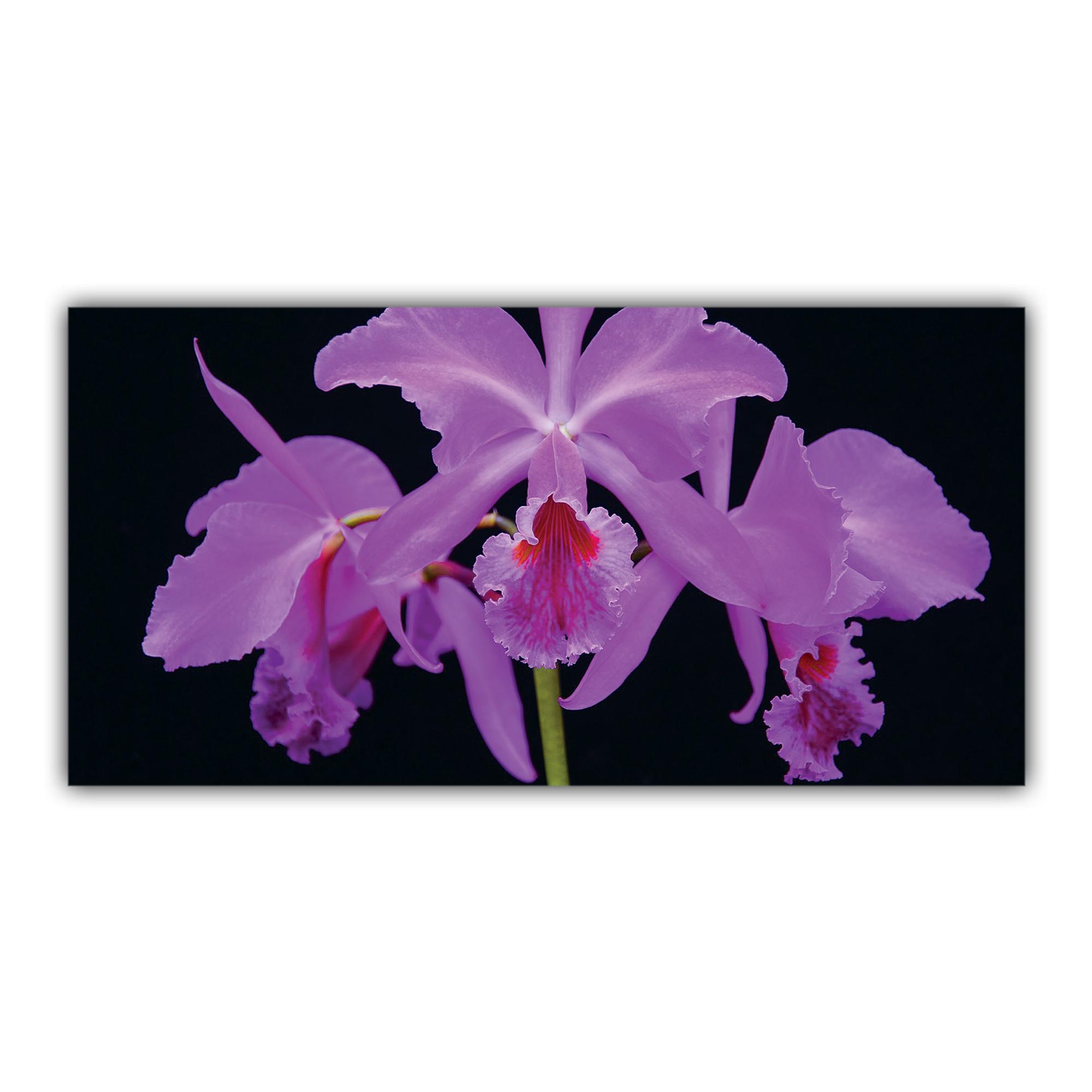 Orchidée Exotique Mauve