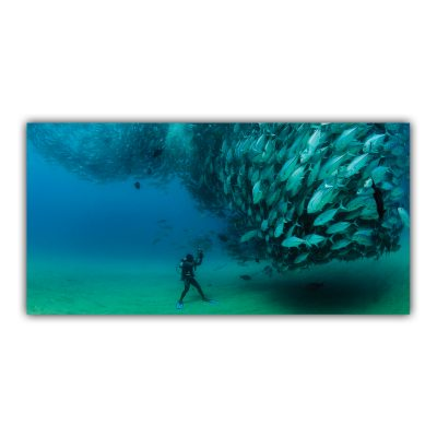 Plongée sous Marine Poissons