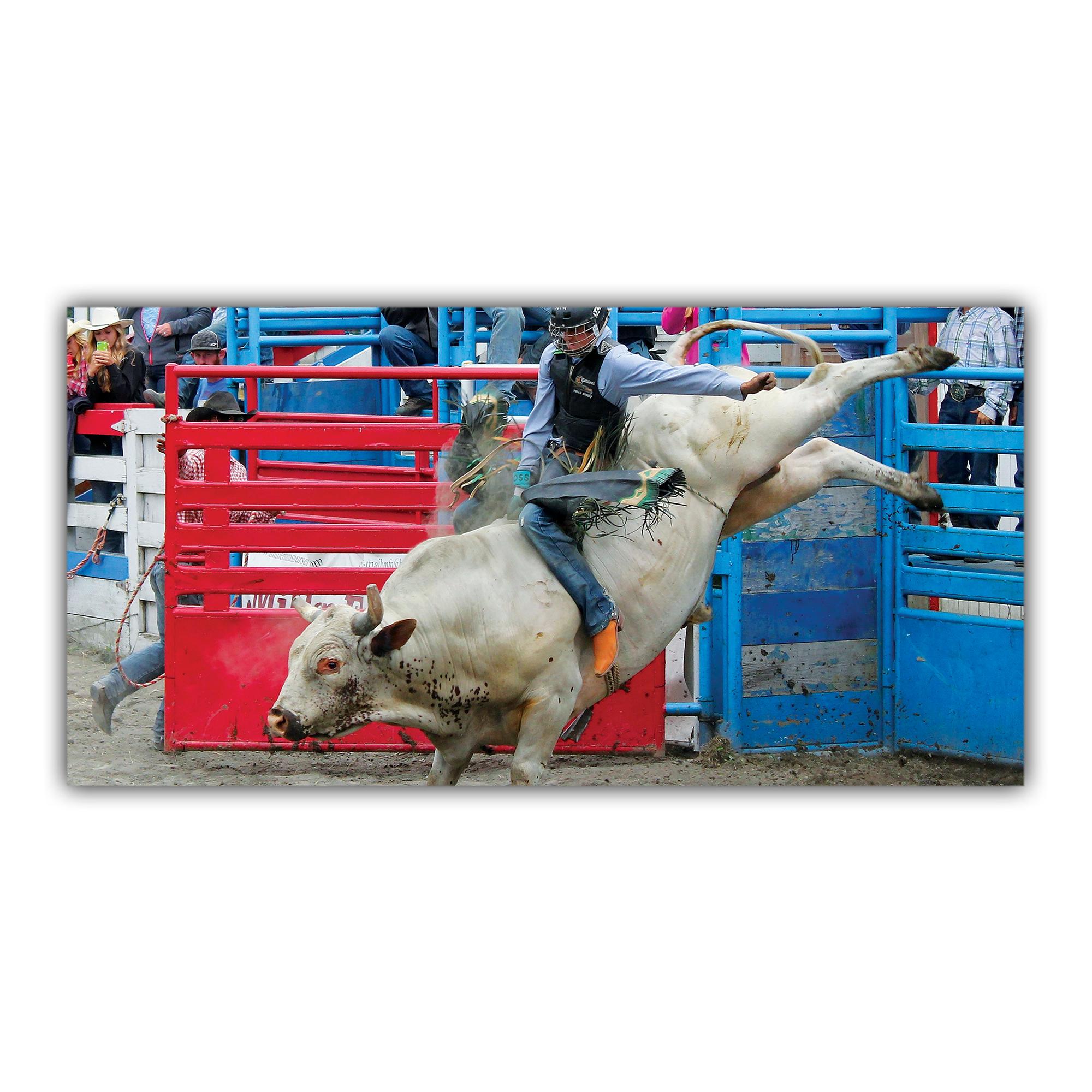 Rodéo Cow-boy Taureau