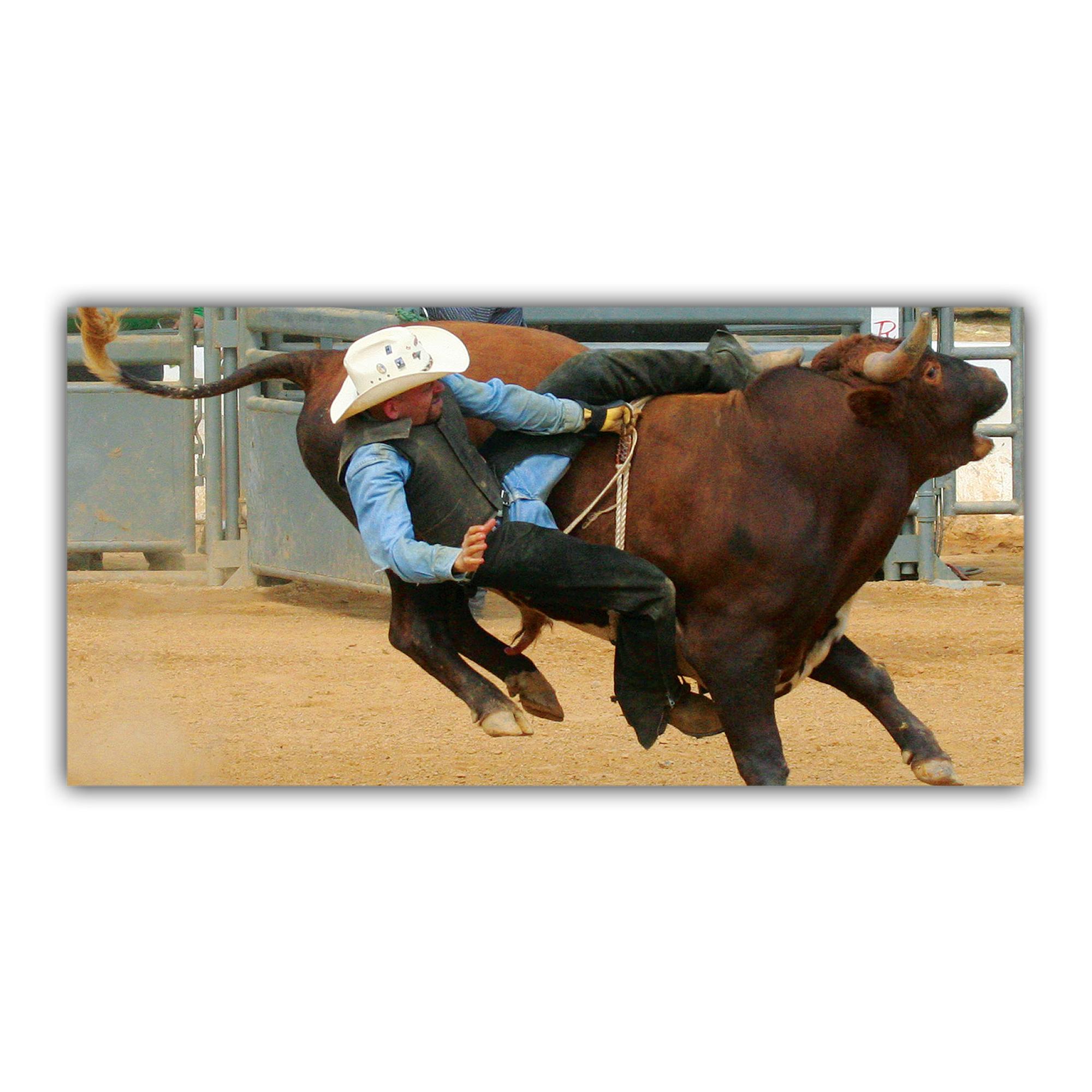 Rodéo Cow-boy Taureau USA