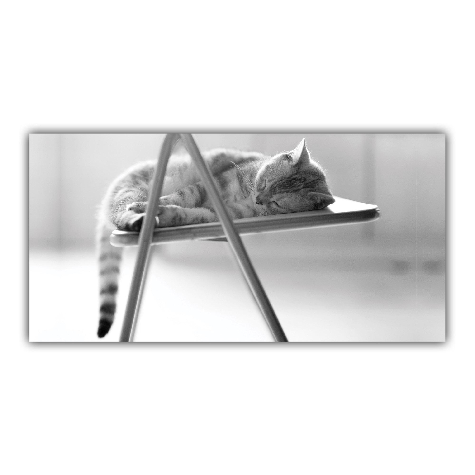 Chat dormant Noir et Blanc