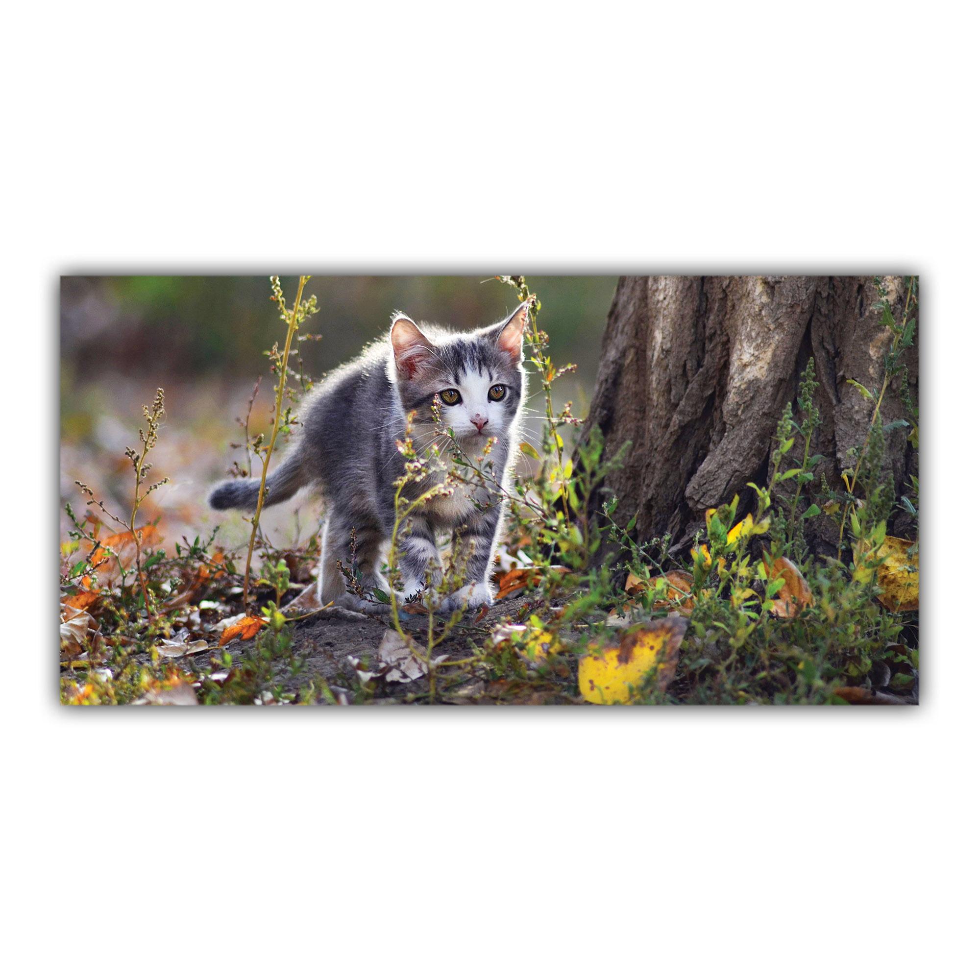 Chaton Tigré dans la Forêt