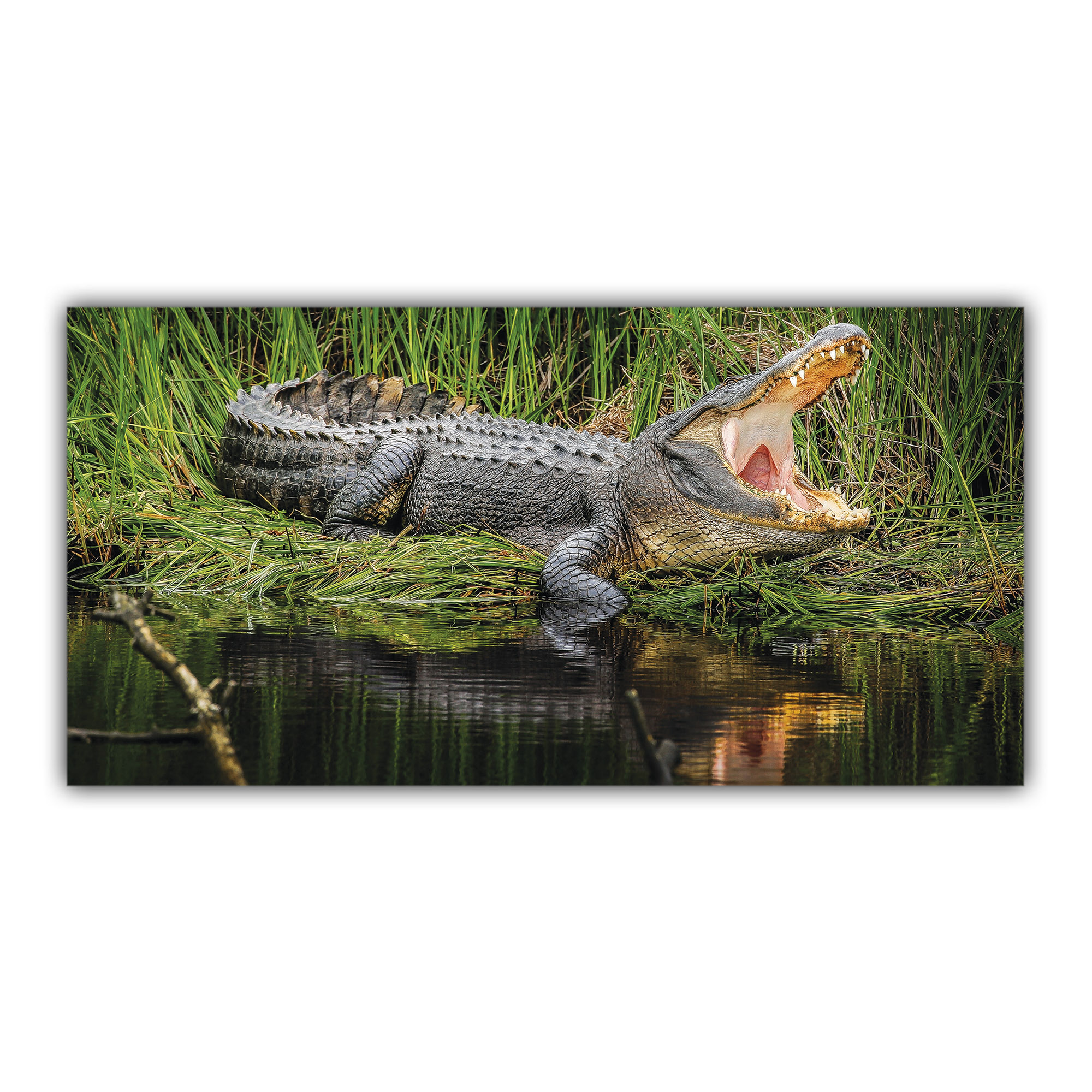 Crocodile au bord de la Rivière